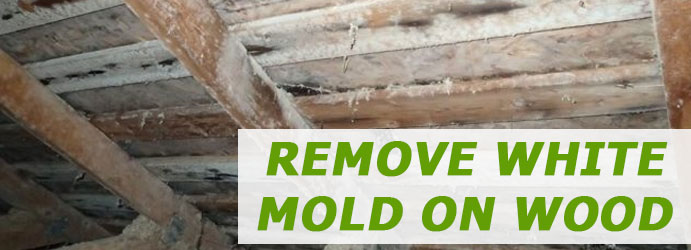 Remove White Mold on Wood Melbourne